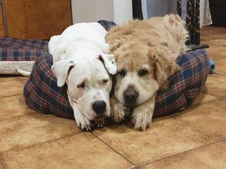 La Leishmaniose le fléau de la Côte D'azur  pour les chiens résidents ou vacanciers
